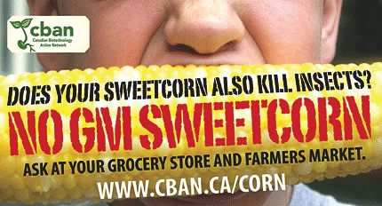 GM Sweetcorn kills bugs