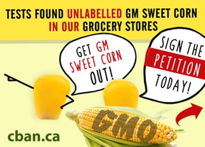 Unlabelled GMO sweet corn