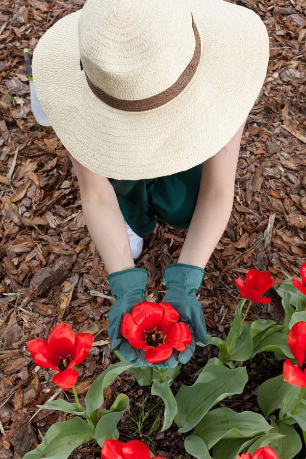 planting red flower