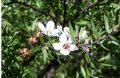 Flora Mānuka: a honey of a partnership with New Zealand's Māori