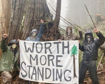 Ancient forest blockade